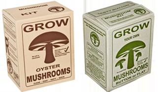 Mushroom Gourmet | Home